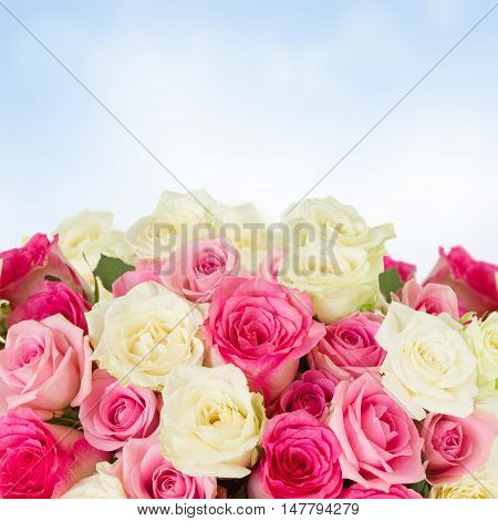 bunch of pink and white fresh rose flowers border with cpy space on blue bokeh background