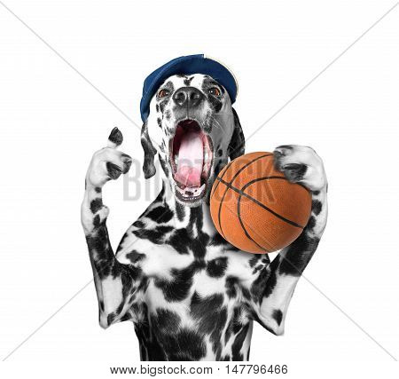 Cute dog in cap holding a ball and shout and scream -- isolated on white