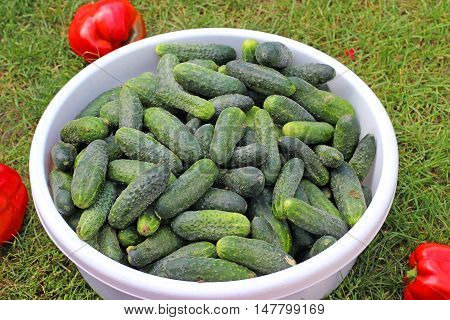 Green cucumbers in a bowl on grass