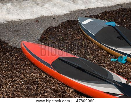 Colorful Boards Designated for Stand up Surfing on the Beach with Oars