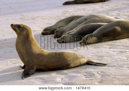Seals In Formation