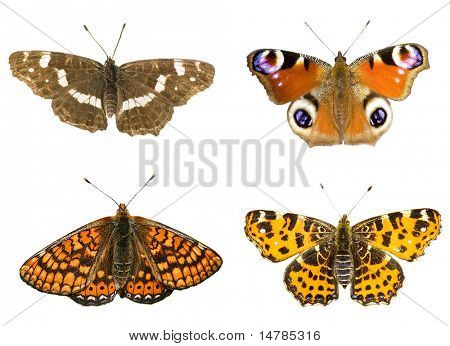 four beautiful butterflies  on white background
