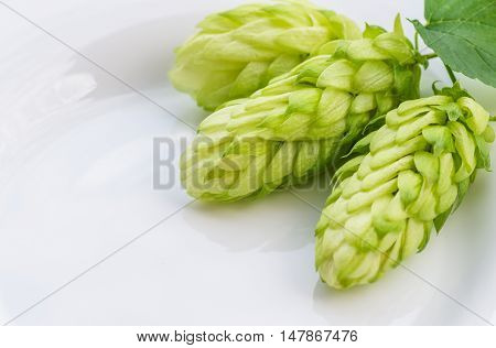 Cones Green ripe hops prepared for brewing beer , close, background