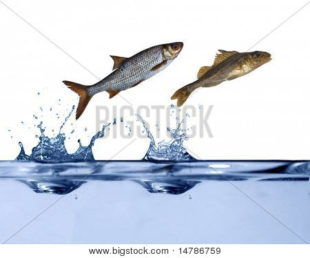 two small fishes are jumping above blue water