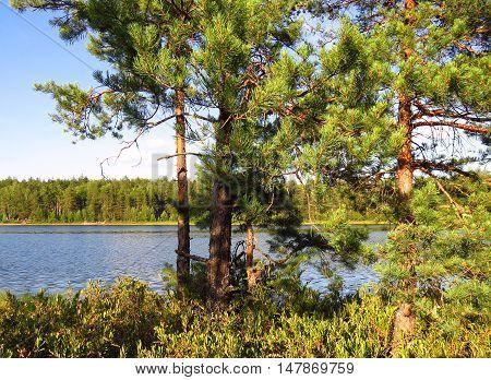 Forest on the coast of lake. Sunday on a coast of lake.