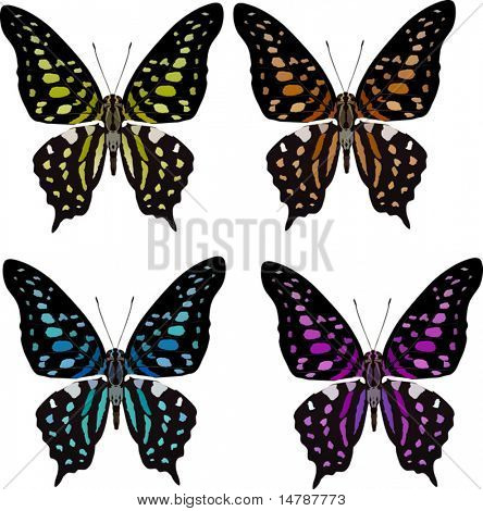 illustration with four tropical butterflies isolated on white background