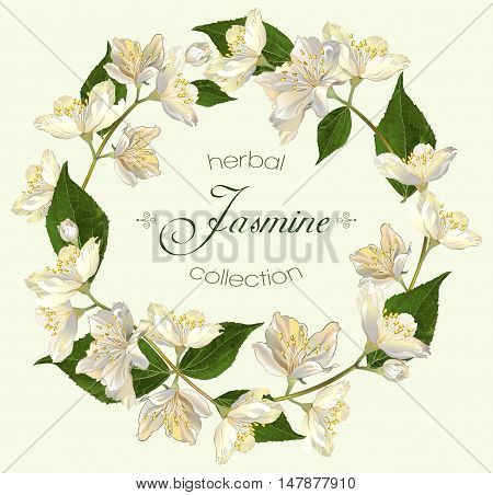 Vector jasmine flowers round banner. Design for tea, natural cosmetics, beauty store, organic health care products, perfume, essential oil, homeopathy, aromatherapy. With place for text