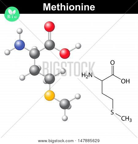 Methionine proteinogenic essential amino acid molecular formula and model 2d and 3d illustration vector on white background eps 8
