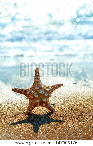Starfish in the Sand on a Beach