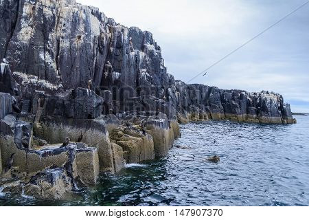 The Farne Islands are a wildlife habitat and home to thousands of sea birds and seals.  The white on the rocks is chalk not bird droppings as is believed by most visitors.