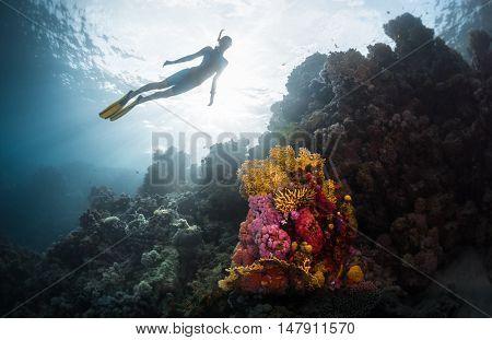Free diver exploring vivid coral reef in tropical sea