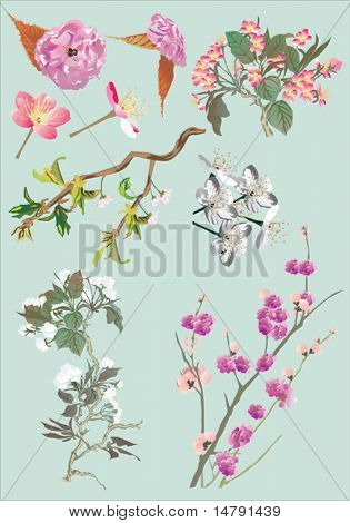illustration with cherry tree flowers on blue background