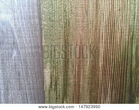 mold on texturized wooden pattern for background and graphic use