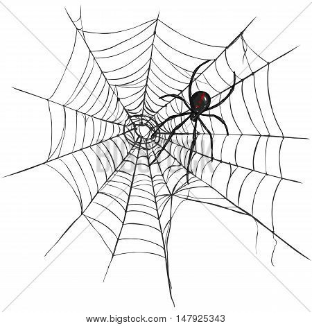 Vector Black Widow Spider On Spider's Web.