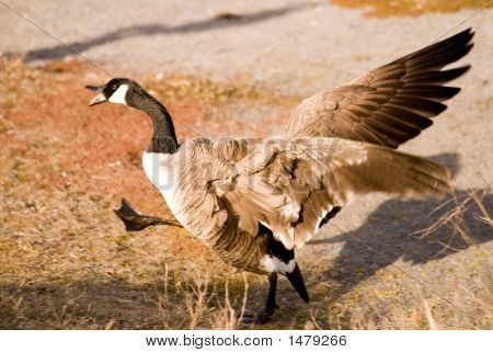 Freaked Out Goose