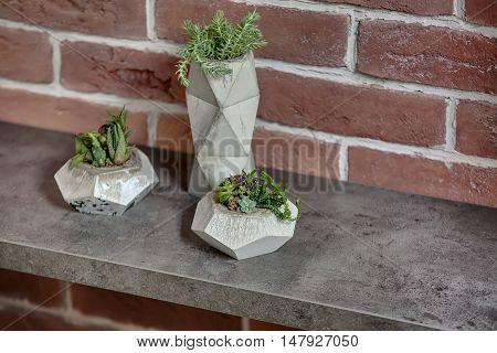 Close-up photo of three decorative pots with green plants on the textured rack on the brick wall background. Horizontal.