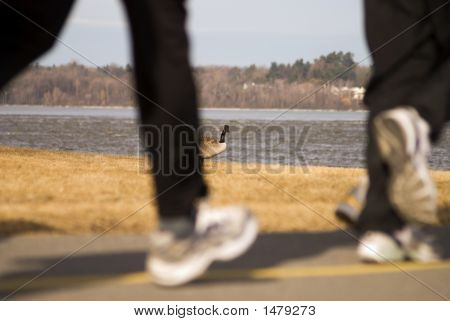 Canada Goose And Runners 2