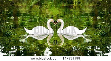 Two swans on a lake surrounded by trees.