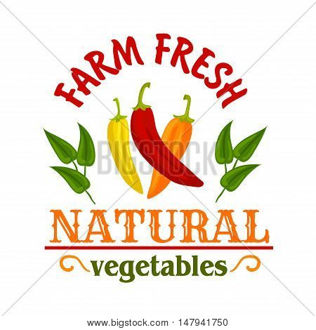 Hot chilli and cayenne peppers vegetables symbol with red, yellow and orange spicy peppers, framed by leaves and headers Natural and Farm Fresh. Spice badge or chilli sauce packaging design