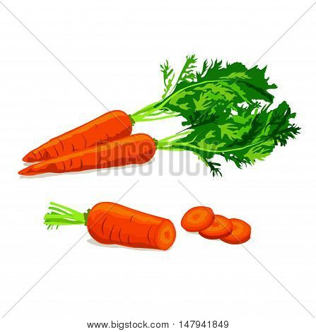 Carrots. Ripe carrot food ingredient. Vegetable carrot isolated