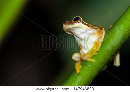 Rainforest Frog In Costa Rica