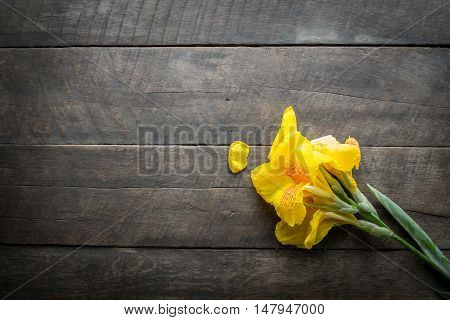 yellow flower and wood nature background .
