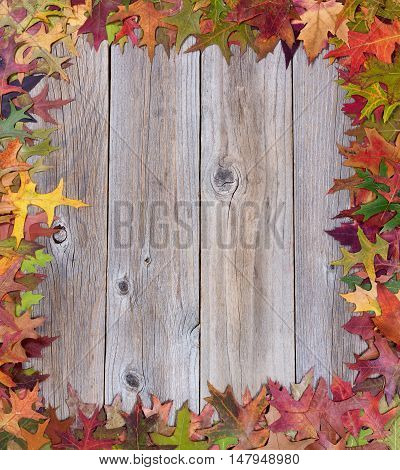 Overhead view of early seasonal autumn leaves complete borders on rustic wooden boards.