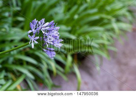 Tropical Flower In Bloom
