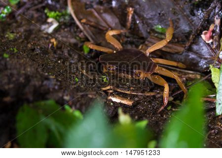 Crab In The Cloud Forest