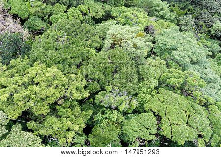 Tree Tops In Monteverde