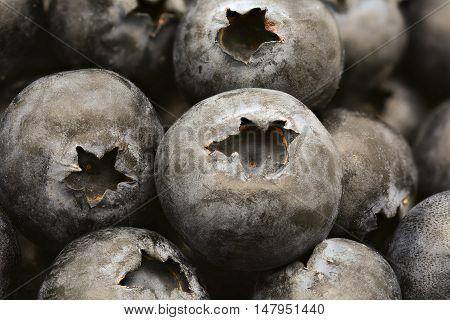 close up of fresh ripe blueberries fruit background