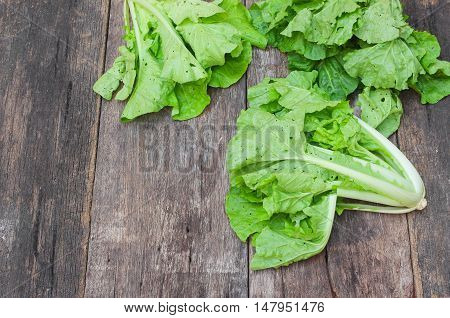 chinese cabbage organic vegetable on  wooden table Insect eat hole in the leaf and copy space.