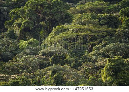 Tree Canopy Background