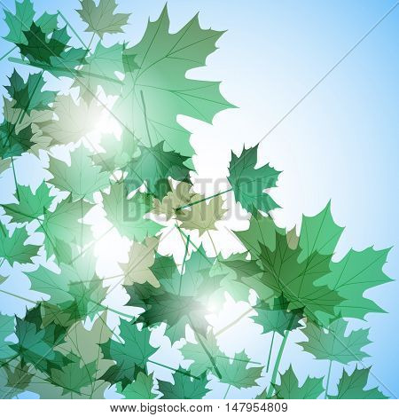 Illustration autumn still life. Maple leaves. Vector background