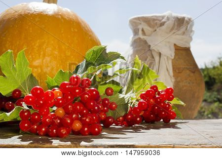 Bunch of viburnum and pumpkin outdoors in summer