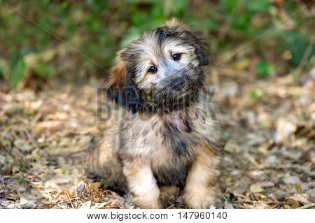 Puppy dog is an adorable fluffy puppy dog outdoors looking as cute as an animal can be.