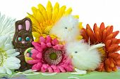 Chocolate Easter bunny with chicks and daisies. poster