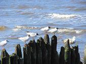 Lot of seagulls on breakwaters in Kołobrzeg (Poland) poster