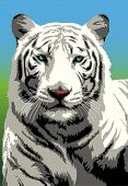 Portrait of white Bengal tiger looking intently (With several layers) poster