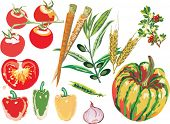 illustration with different vegetables collection isolated on white background