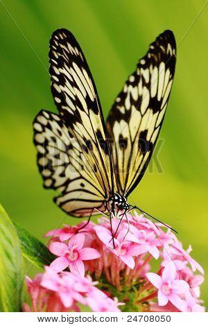 Butterfly on flower in Kew Garden