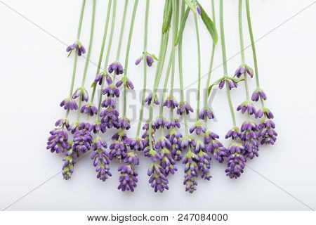 Lavender flowers bundle on a white background - flowers and plants