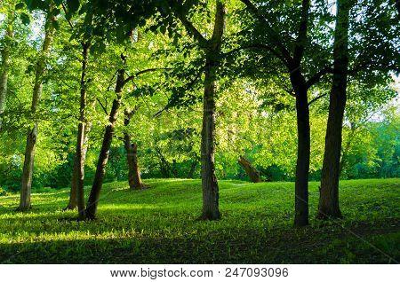 Summer Landscape, Summer Sunny Park At Sunset. Summer Park Trees Lit By Evening Summer Sunlight. Sum
