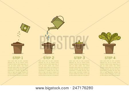 Growing Plant Stages. Seeds, Watering Can, Sprout And Grow Plant. House Plant In Flower Pot. Line St