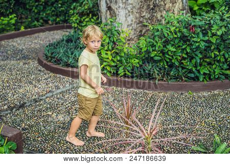 Boy Walking On A Textured Cobble Pavement, Reflexology. Pebble stones on the pavement for foot reflexology. poster