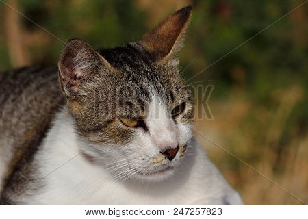 Portrait Of Feral Brown Cat In The Countryside. Photography Of Nature And Wildlife.