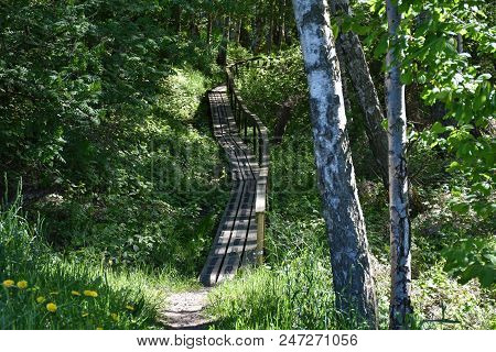 Footpath With A Wooden Bridge And Handrails In A Green Forest At The Swedish Island Oland