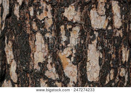 Black Brown Vegetal Texture Of Burnt Pine Bark