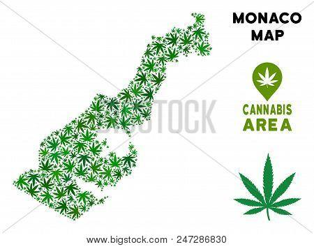 Монако с коноплей употребление конопли история