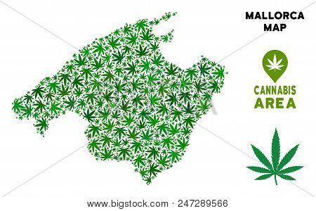 Ganja Spain Mallorca Island Map Collage Of Marijuana Leaves. Narcotic Distribution Concept. Vector S